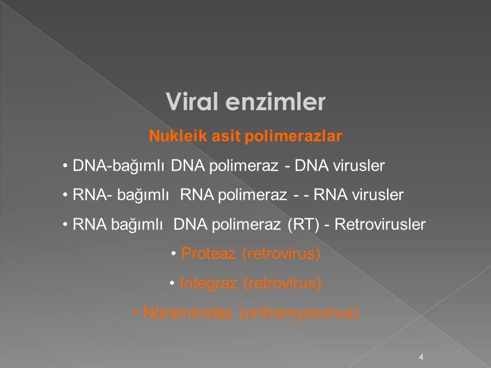 4 Viral enzimler Nukleik asit polimerazlar DNA-bağımlı DNA polimeraz - DNA virusler RNA- bağımlı RNA polimeraz - - RNA virusler RNA bağımlı DNA polime