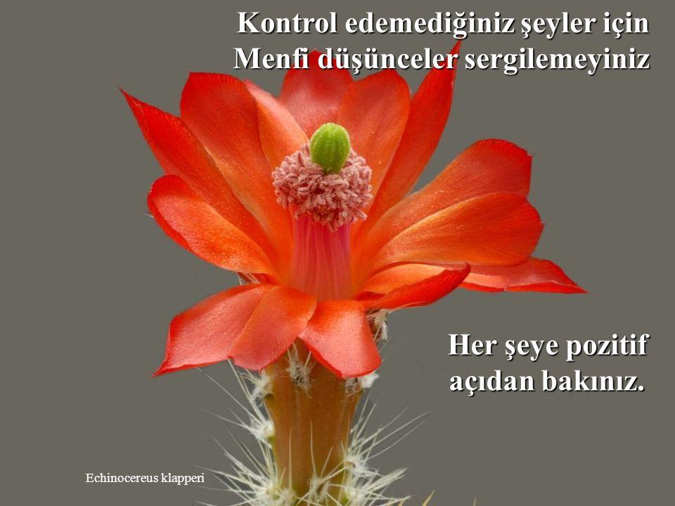 Mammillaria albiflora Boş laflarla enerjinizi harcamayınız.