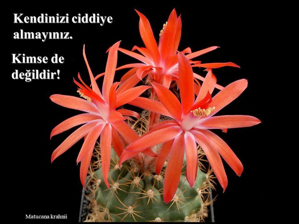 Neowerdermannia vorwerkii Yaşam, insanlardan nefret edecek kadar uzun değildir.
