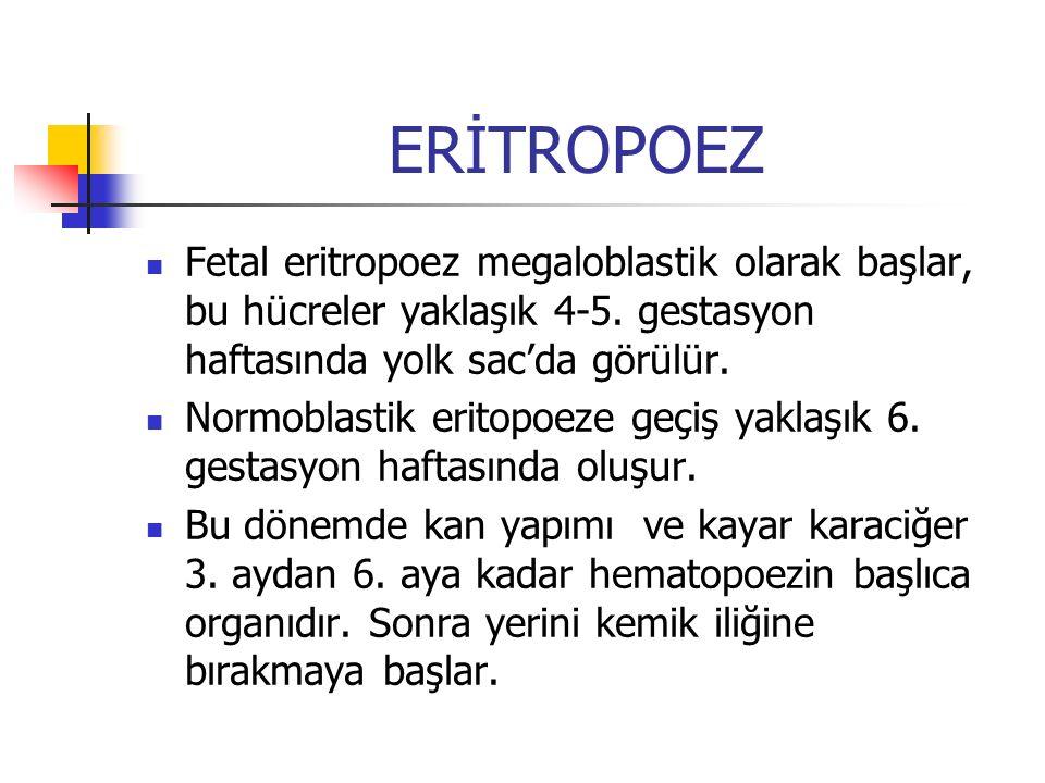 ERİTROPOEZ Fetal eritropoez megaloblastik olarak başlar, bu hücreler yaklaşık 4-5. gestasyon haftasında yolk sac'da görülür. Normoblastik eritopoeze g