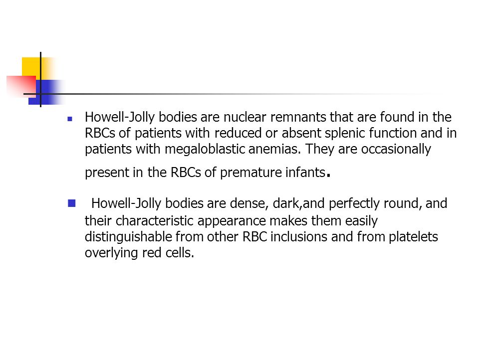 Howell-Jolly bodies are nuclear remnants that are found in the RBCs of patients with reduced or absent splenic function and in patients with megalobla