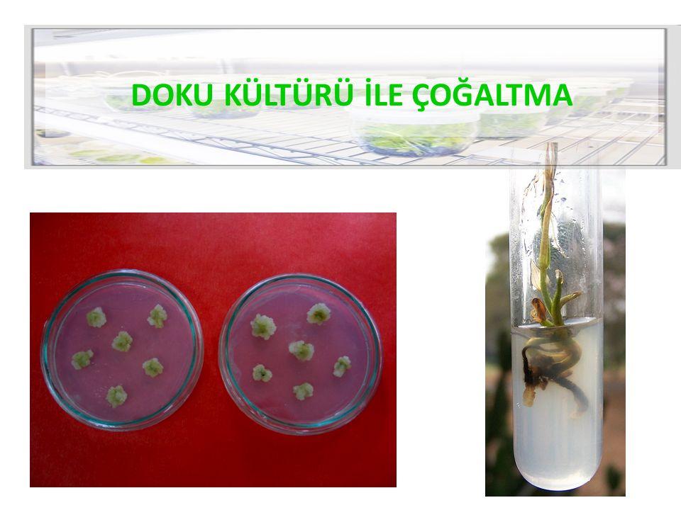Bitki dokularının steril besin ortamları üzerinde amaca yönelik gelişimlerinin ve farklılaşmalarının sağlanması amacıyla yapılan işlemlerdir.