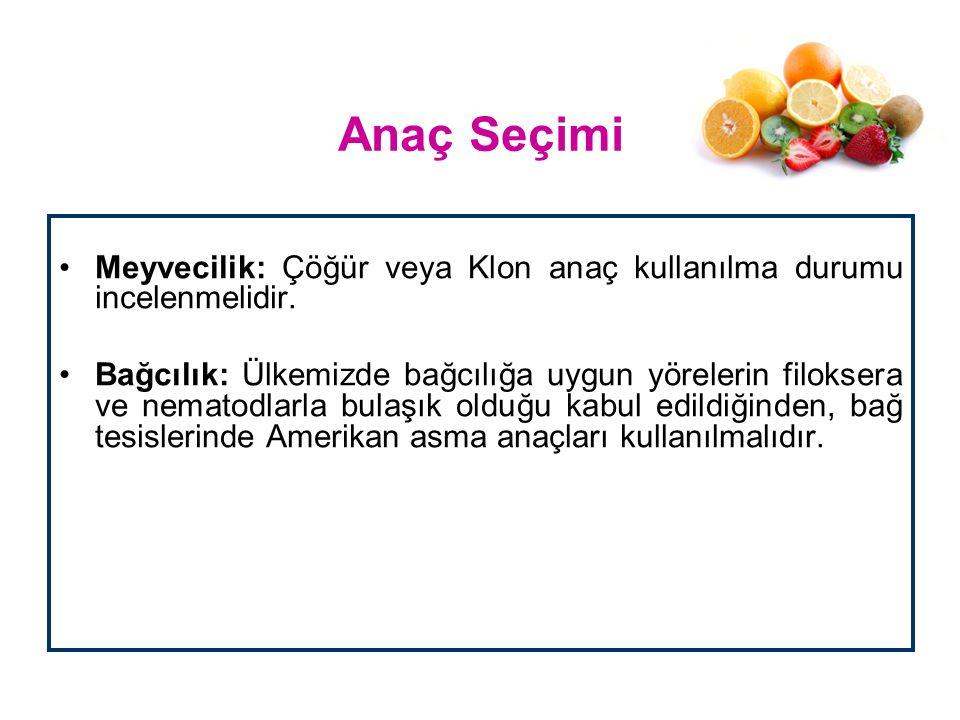 Anaç Seçimi Meyvecilik: Çöğür veya Klon anaç kullanılma durumu incelenmelidir. Bağcılık: Ülkemizde bağcılığa uygun yörelerin filoksera ve nematodlarla