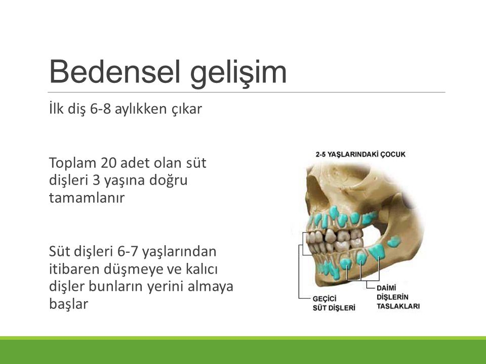 Bedensel gelişim İlk diş 6-8 aylıkken çıkar Toplam 20 adet olan süt dişleri 3 yaşına doğru tamamlanır Süt dişleri 6-7 yaşlarından itibaren düşmeye ve
