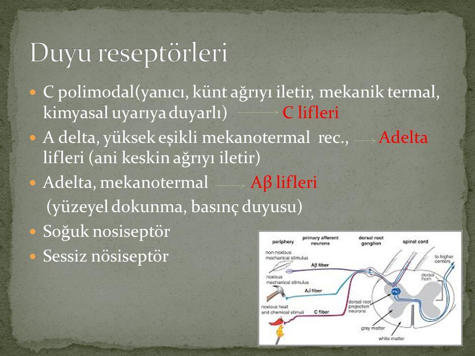 Primer nosiseptif afferent liflerin hücre gövdeleri arka kök ganglionundadır.
