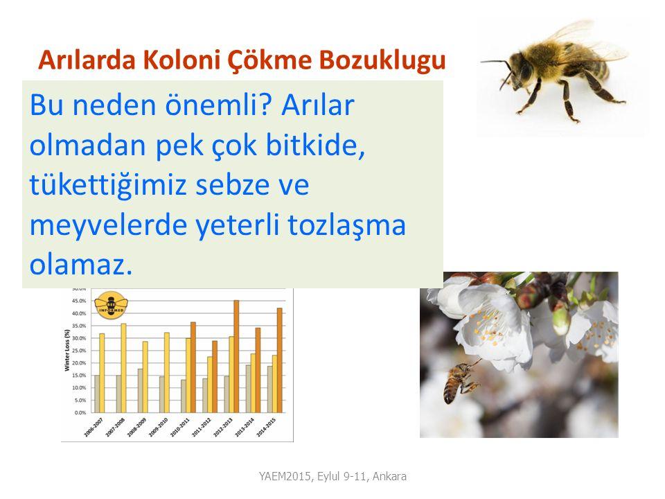 Arılarda Koloni Çökme Bozuklugu -Kiş mevsiminin şiddetine ve ilkbaharda hava değişikliklerine bağlı olarak yılda %10-15 civarında koloni kaybı normal