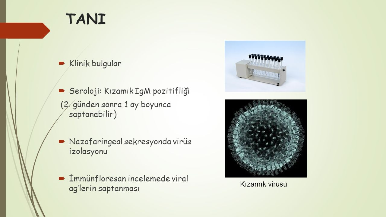 TANI  Klinik bulgular  Seroloji: Kızamık IgM pozitifliği (2. günden sonra 1 ay boyunca saptanabilir)  Nazofaringeal sekresyonda virüs izolasyonu 