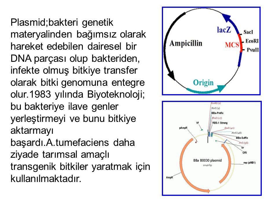 Plasmid;bakteri genetik materyalinden bağımsız olarak hareket edebilen dairesel bir DNA parçası olup bakteriden, infekte olmuş bitkiye transfer olarak