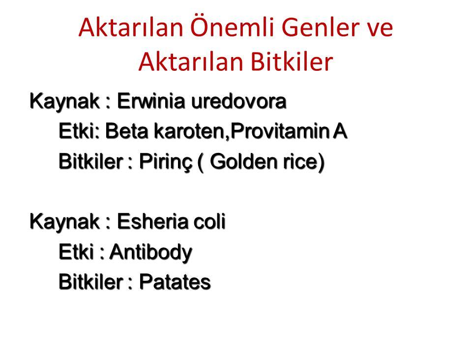 Aktarılan Önemli Genler ve Aktarılan Bitkiler Kaynak : Erwinia uredovora Etki: Beta karoten,Provitamin A Etki: Beta karoten,Provitamin A Bitkiler : Pi