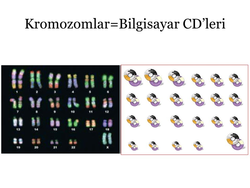 Kromozomlar=Bilgisayar CD'leri