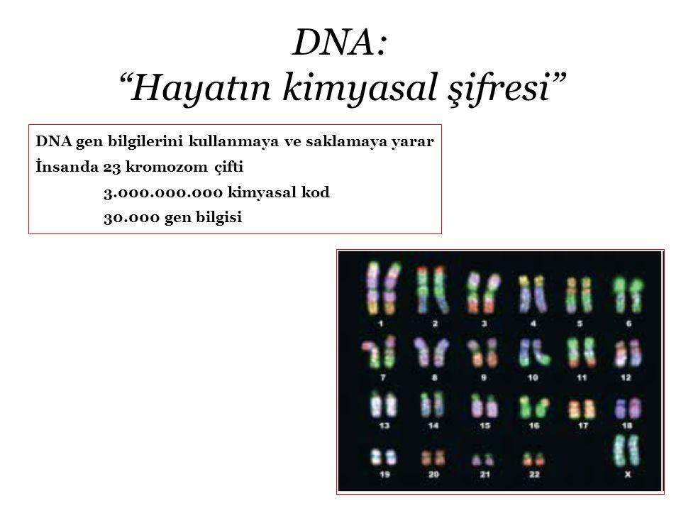 """DNA: """"Hayatın kimyasal şifresi"""" DNA gen bilgilerini kullanmaya ve saklamaya yarar İnsanda 23 kromozom çifti 3.000.000.000 kimyasal kod 30.000 gen bilg"""