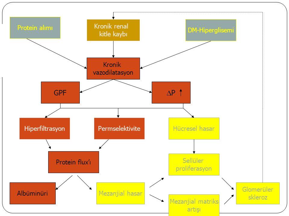 Protein alımı PermselektiviteHiperfiltrasyon PP GPF Kronik vazodilatasyon Kronik renal kitle kaybı DM-Hiperglisemi Mezanjial hasarAlbüminüri Protein flux'ı Hücresel hasar Mezanjial matriks artışı Glomerüler skleroz Sellüler proliferasyon