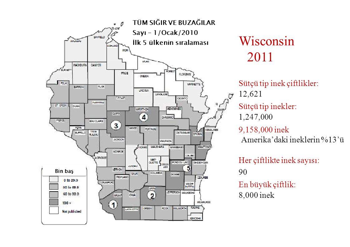 Wisconsin 2011 Sütçü tip inek çiftlikler: 12,621 Sütçü tip inekler: 1,247,000 9,158,000 inek Amerika'daki ineklerin %13'ü Her çiftlikte inek sayısı: 9