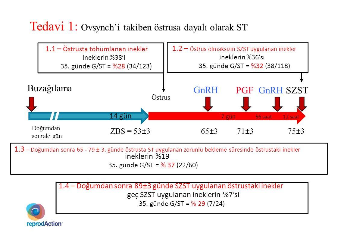 GnRH PGF GnRH SZST Buzağılama 14 gün 7 gün 56 saat12 saat Östrus Tedavi 1: Ovsynch'i takiben östrusa dayalı olarak ST 1.1 – Östrusta tohumlanan inekle