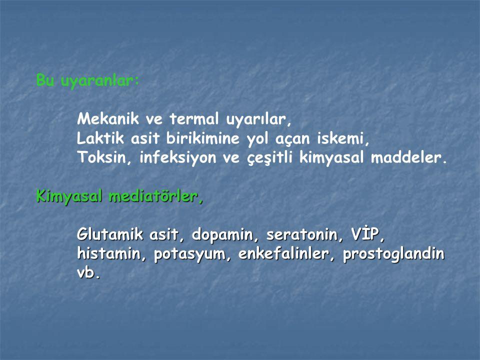 Ağrı uyarılarını taşıyan sinir lifleri, Myelinize A-Delta lifleri Demiyelinize C lifleri.