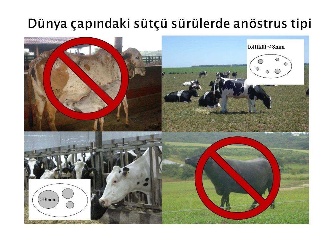 Vücut Kondüsyon Skoru Kurudaki inek Sağılan inekler, doğumdan sonraki günler