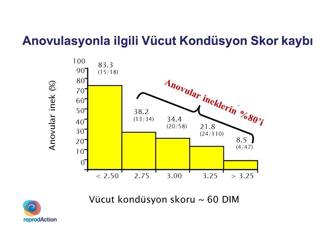 Anovular inek (%) 83.3 (15/18) 0 40 30 20 10 100 90 80 70 60 50 2.75< 2.503.003.25 38.2 (13/34) 34.4 (20/58) 21.8 (24/110) 8.5 (4/47) > 3.25 Vücut kon