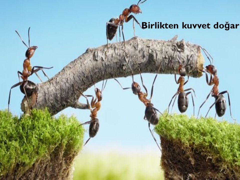 Birlikten kuvvet do ğ ar
