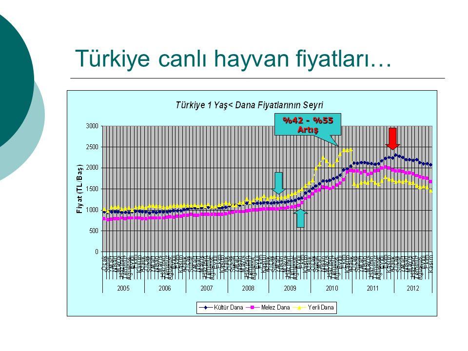 Türkiye canlı hayvan fiyatları… %42 - %55 Artış