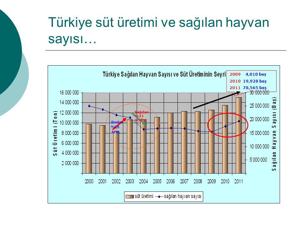 Türkiye süt üretimi ve sağılan hayvan sayısı… üretim %26 Artış Sağılan %21 azalış 2009 4,010 baş 2010 19,928 baş 2011 78,565 baş