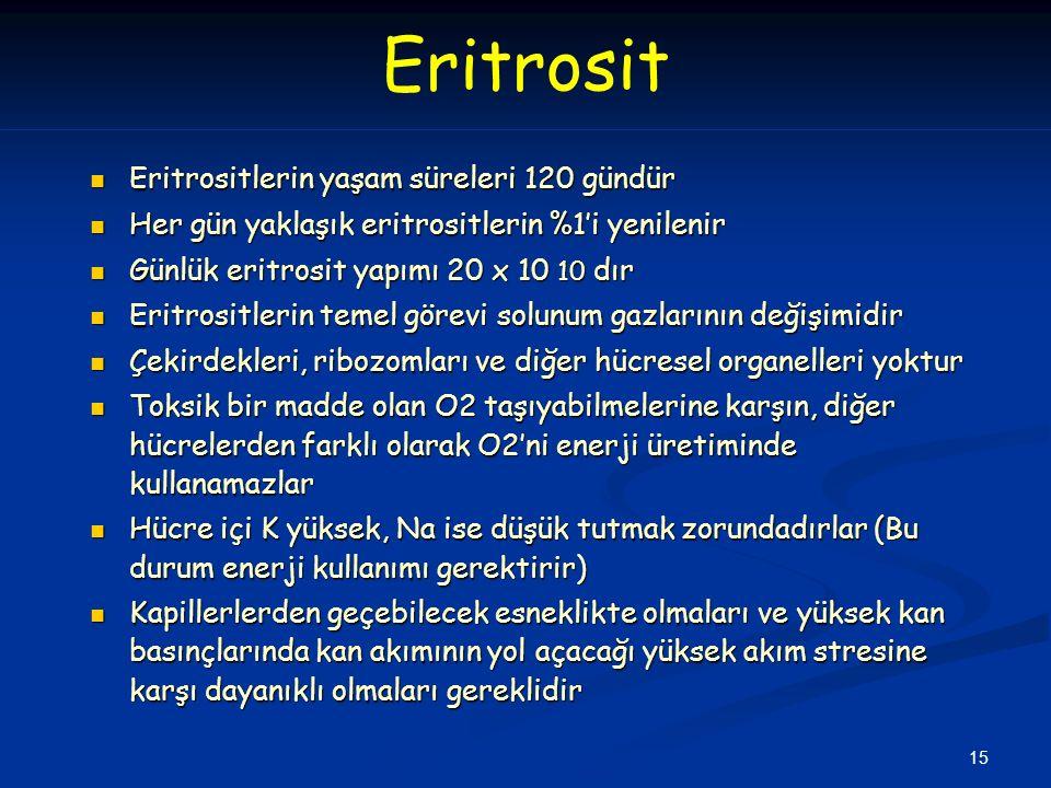 15 Eritrosit Eritrositlerin yaşam süreleri 120 gündür Eritrositlerin yaşam süreleri 120 gündür Her gün yaklaşık eritrositlerin %1'i yenilenir Her gün yaklaşık eritrositlerin %1'i yenilenir Günlük eritrosit yapımı 20 x 10 10 dır Günlük eritrosit yapımı 20 x 10 10 dır Eritrositlerin temel görevi solunum gazlarının değişimidir Eritrositlerin temel görevi solunum gazlarının değişimidir Çekirdekleri, ribozomları ve diğer hücresel organelleri yoktur Çekirdekleri, ribozomları ve diğer hücresel organelleri yoktur Toksik bir madde olan O2 taşıyabilmelerine karşın, diğer hücrelerden farklı olarak O2'ni enerji üretiminde kullanamazlar Toksik bir madde olan O2 taşıyabilmelerine karşın, diğer hücrelerden farklı olarak O2'ni enerji üretiminde kullanamazlar Hücre içi K yüksek, Na ise düşük tutmak zorundadırlar (Bu durum enerji kullanımı gerektirir) Hücre içi K yüksek, Na ise düşük tutmak zorundadırlar (Bu durum enerji kullanımı gerektirir) Kapillerlerden geçebilecek esneklikte olmaları ve yüksek kan basınçlarında kan akımının yol açacağı yüksek akım stresine karşı dayanıklı olmaları gereklidir Kapillerlerden geçebilecek esneklikte olmaları ve yüksek kan basınçlarında kan akımının yol açacağı yüksek akım stresine karşı dayanıklı olmaları gereklidir