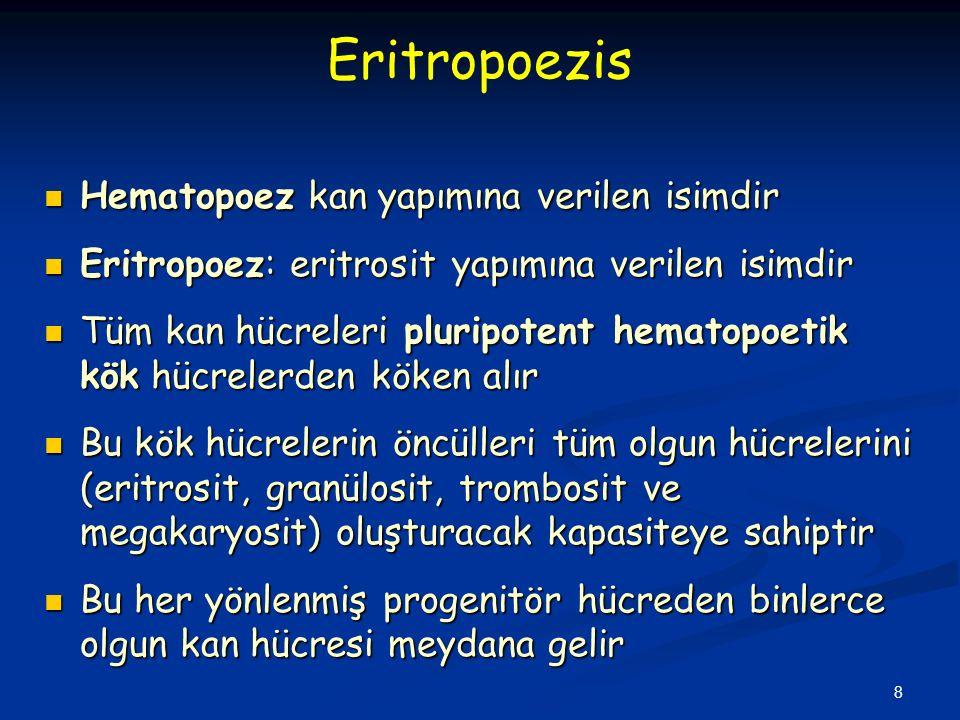 8 Hematopoez kan yapımına verilen isimdir Hematopoez kan yapımına verilen isimdir Eritropoez: eritrosit yapımına verilen isimdir Eritropoez: eritrosit yapımına verilen isimdir Tüm kan hücreleri pluripotent hematopoetik kök hücrelerden köken alır Tüm kan hücreleri pluripotent hematopoetik kök hücrelerden köken alır Bu kök hücrelerin öncülleri tüm olgun hücrelerini (eritrosit, granülosit, trombosit ve megakaryosit) oluşturacak kapasiteye sahiptir Bu kök hücrelerin öncülleri tüm olgun hücrelerini (eritrosit, granülosit, trombosit ve megakaryosit) oluşturacak kapasiteye sahiptir Bu her yönlenmiş progenitör hücreden binlerce olgun kan hücresi meydana gelir Bu her yönlenmiş progenitör hücreden binlerce olgun kan hücresi meydana gelir Eritropoezis