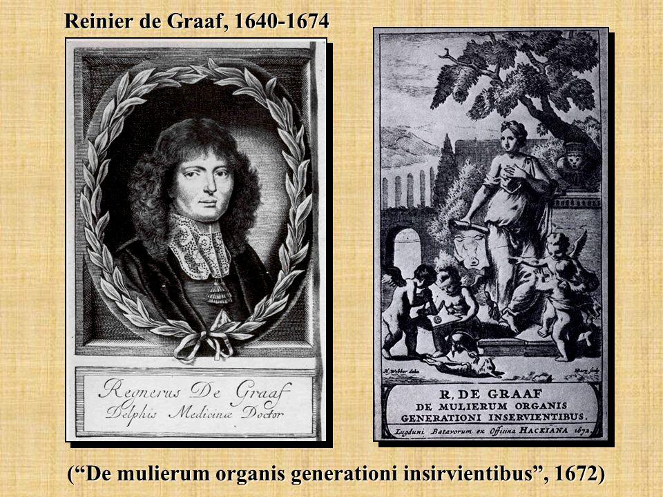 Reinier de Graaf, 1640-1674 ( De mulierum organis generationi insirvientibus , 1672)