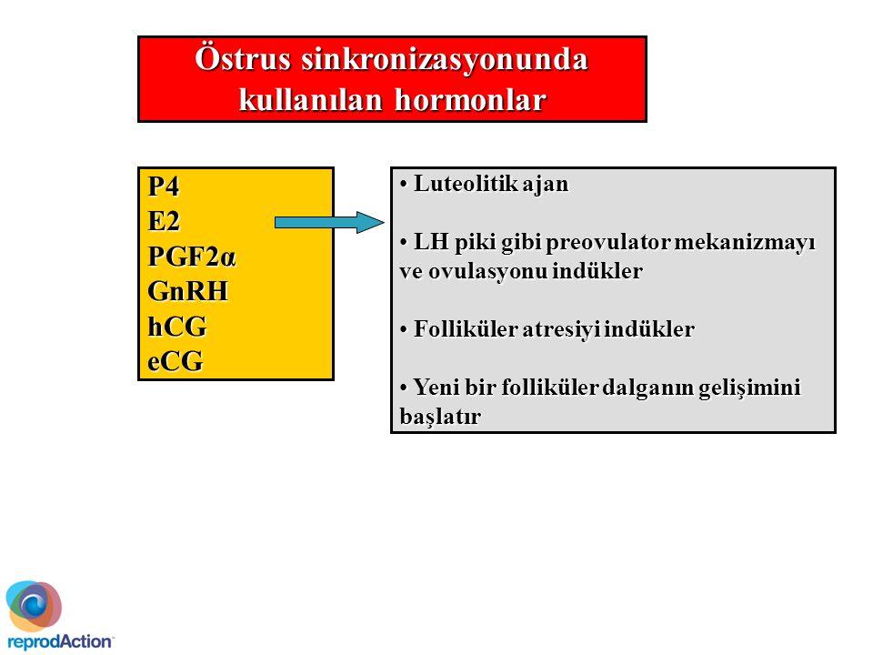 Östrus sinkronizasyonunda kullanılan hormonlar P4E2 PGF2α GnRHhCGeCG Luteolitik ajan Luteolitik ajan LH piki gibi preovulator mekanizmayı ve ovulasyonu indükler LH piki gibi preovulator mekanizmayı ve ovulasyonu indükler Folliküler atresiyi indükler Folliküler atresiyi indükler Yeni bir folliküler dalganın gelişimini başlatır Yeni bir folliküler dalganın gelişimini başlatır