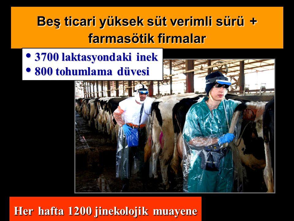 Her hafta 1200 jinekolojik muayene Beş ticari yüksek süt verimli sürü + farmasötik firmalar 3700 laktasyondaki inek 3700 laktasyondaki inek 800 tohumlama düvesi 800 tohumlama düvesi