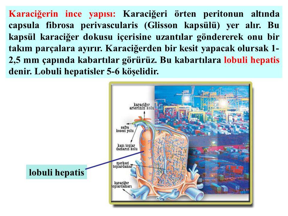 Karaciğerin ince yapısı: Karaciğeri örten peritonun altında capsula fibrosa perivascularis (Glisson kapsülü) yer alır. Bu kapsül karaciğer dokusu içer