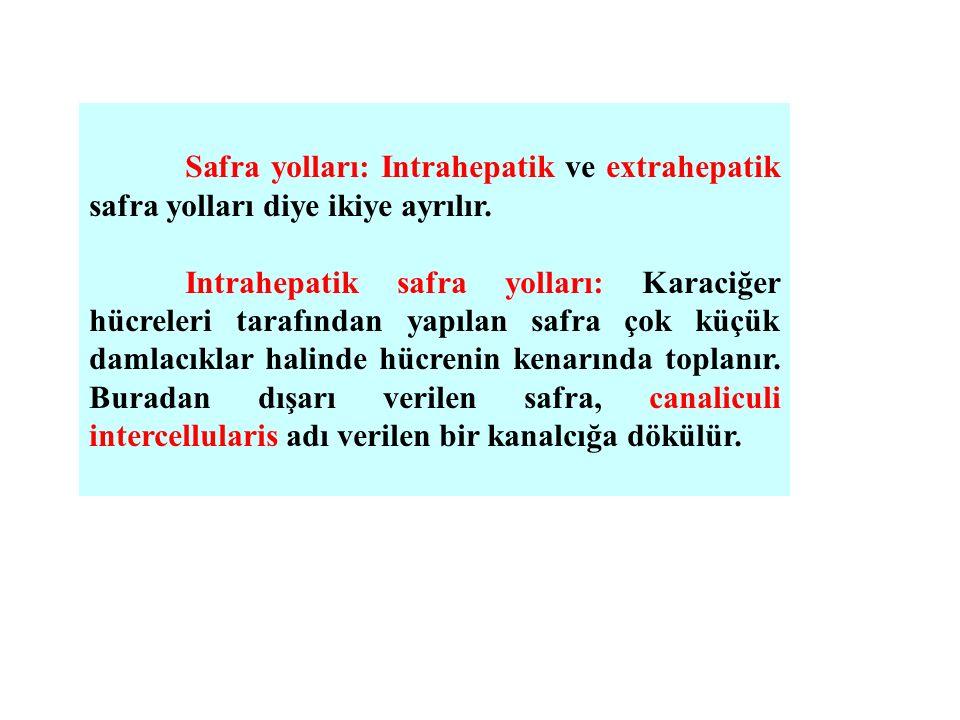 Safra yolları: Intrahepatik ve extrahepatik safra yolları diye ikiye ayrılır. Intrahepatik safra yolları: Karaciğer hücreleri tarafından yapılan safra
