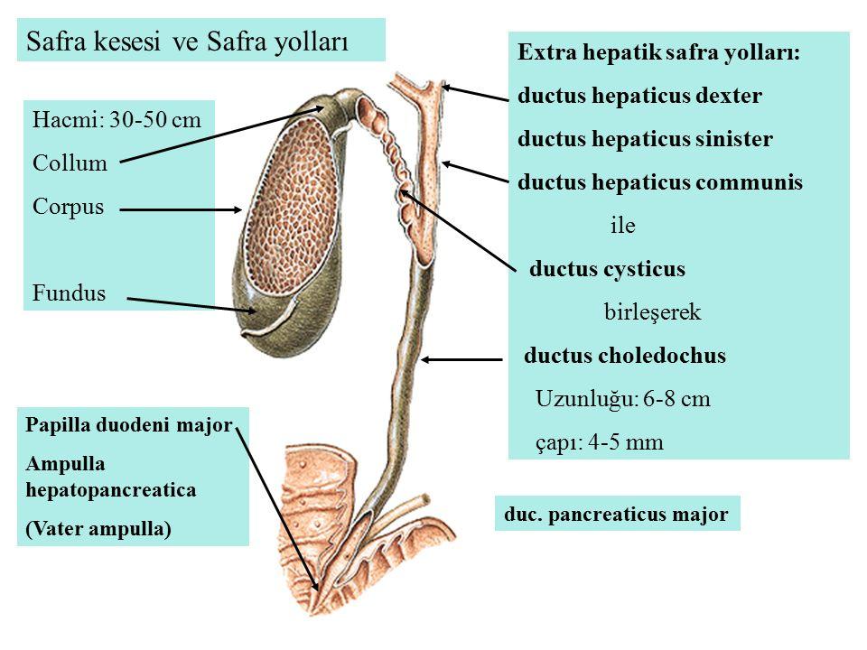 Safra kesesi ve Safra yolları Extra hepatik safra yolları: ductus hepaticus dexter ductus hepaticus sinister ductus hepaticus communis ile ductus cyst