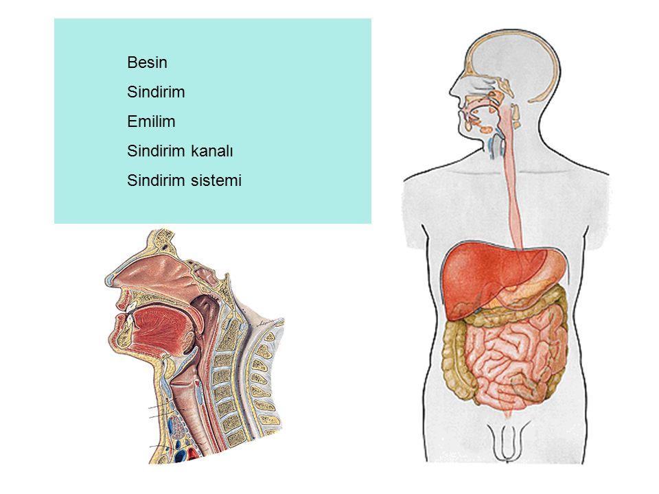 Midenin kısımları: Mide anatomik olarak 5 kısımda incelenir.