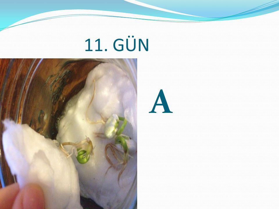 11. GÜN A