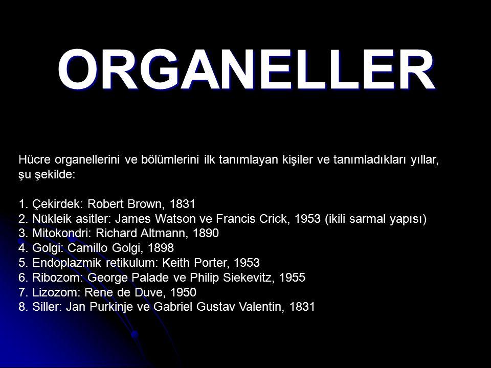ORGANELLER Hücre organellerini ve bölümlerini ilk tanımlayan kişiler ve tanımladıkları yıllar, şu şekilde: 1. Çekirdek: Robert Brown, 1831 2. Nükleik