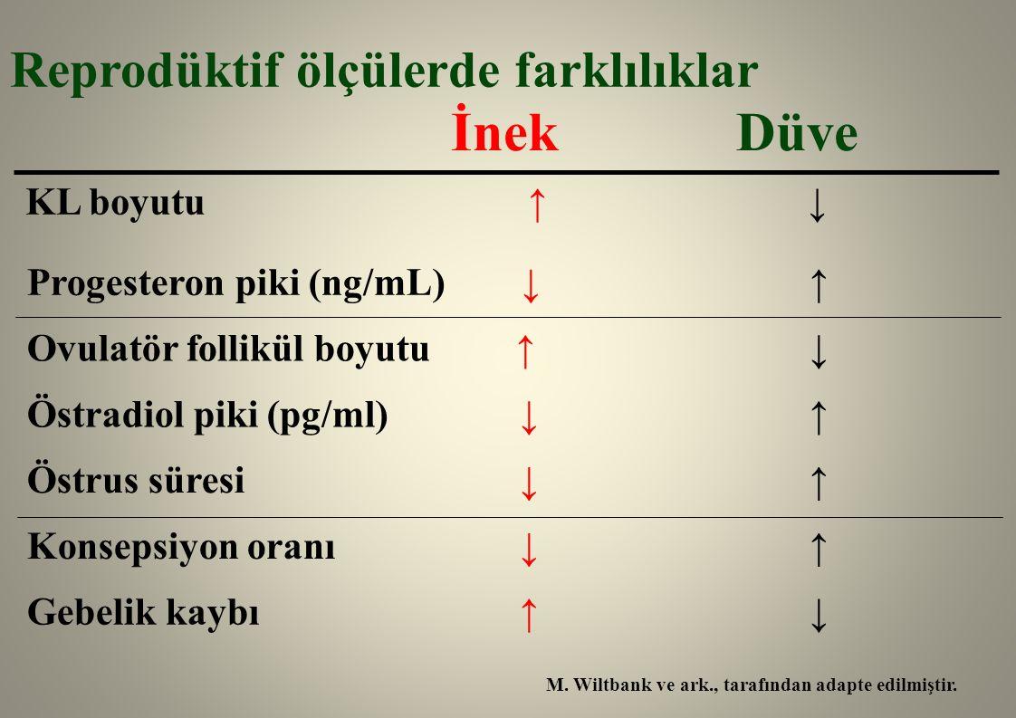 İnek Düve Reprodüktif ölçülerde farklılıklar Östrus süresi ↓ ↑ Konsepsiyon oranı ↓ ↑ Gebelik kaybı ↑ ↓ Progesteron piki (ng/mL) ↓ ↑ M. Wiltbank ve ark