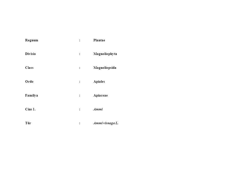Regnum:Plantae Divisio:Magnoliophyta Class:Magnoliopsida Ordo:Apiales Familya:Apiaceae Cins 1.:Ammi Tür:Ammi visnaga L.