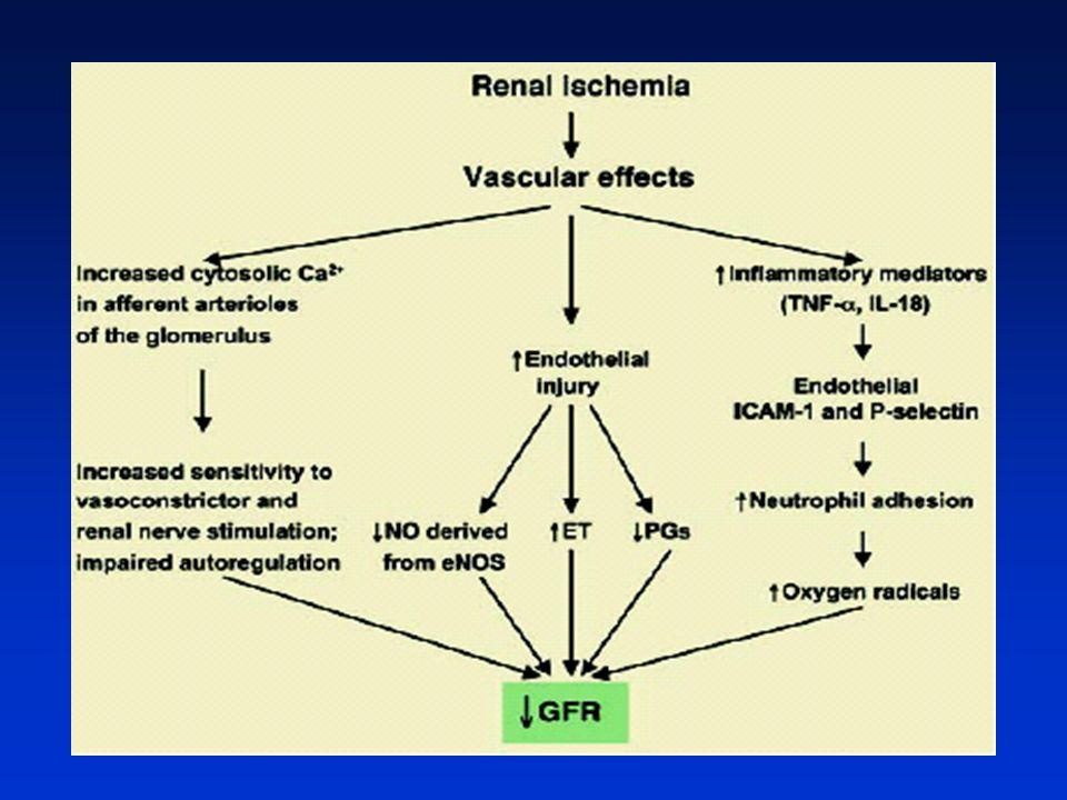 ATN'de OLİGÜRİNİN PATOGENEZİ Achard J et al. 1998 İskemi veya toksik etyoloji Akut renal hasar Vasküler değişiklikler  Kf  RBF Tubuler değişiklikler