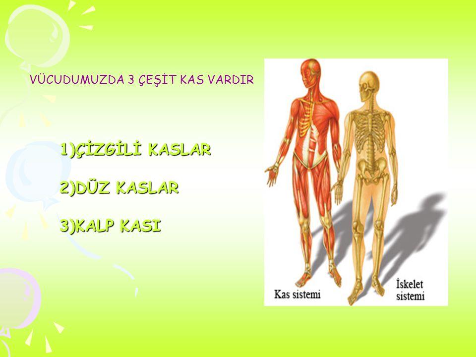İnsan iskeleti, kemiklerden oluşur ve bağlar (ligamanlar), kirişler (tendon), kaslar, kıkırdaklar ve diğer organlar tarafından desteklenir. ligamanlar