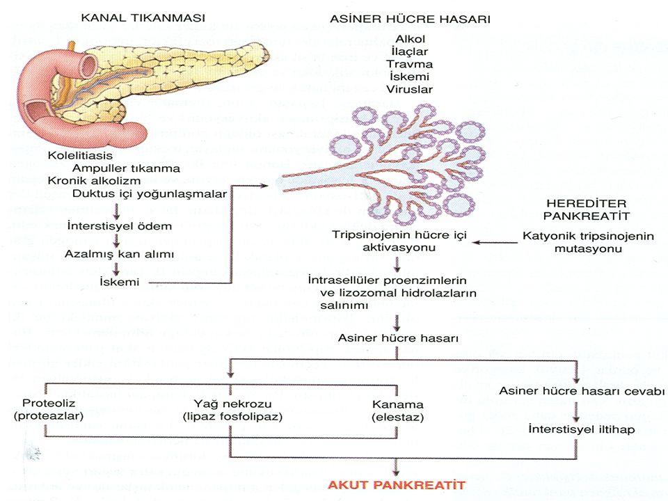 Pankreatit Şiddetinin Belirlenmesi Akut Faz Proteinleri Akut Faz Proteinleri Class-I: IL-1, CRP, Haptoglobulin, α-1 Asid Glikoprotein Class-I: IL-1, CRP, Haptoglobulin, α-1 Asid Glikoprotein Class-II: IL-6, α-2 Makroglobulin, α-1 Antikimotripsin, Pankreatitle İlişkili Protein (PAP) ve Fibrinojen Class-II: IL-6, α-2 Makroglobulin, α-1 Antikimotripsin, Pankreatitle İlişkili Protein (PAP) ve Fibrinojen Hasarlı dokulardan ve aktive mononükleer hücrelerden salınırlar Hasarlı dokulardan ve aktive mononükleer hücrelerden salınırlar CRP > 150 mg / L kötü prognoz CRP > 150 mg / L kötü prognoz İdrarda Tripsinojen Aktivasyon Peptidi (TAP) İdrarda Tripsinojen Aktivasyon Peptidi (TAP) C3a C3a Fosfolipaz A Fosfolipaz A Özelikle ARDS gelişimi Özelikle ARDS gelişimi