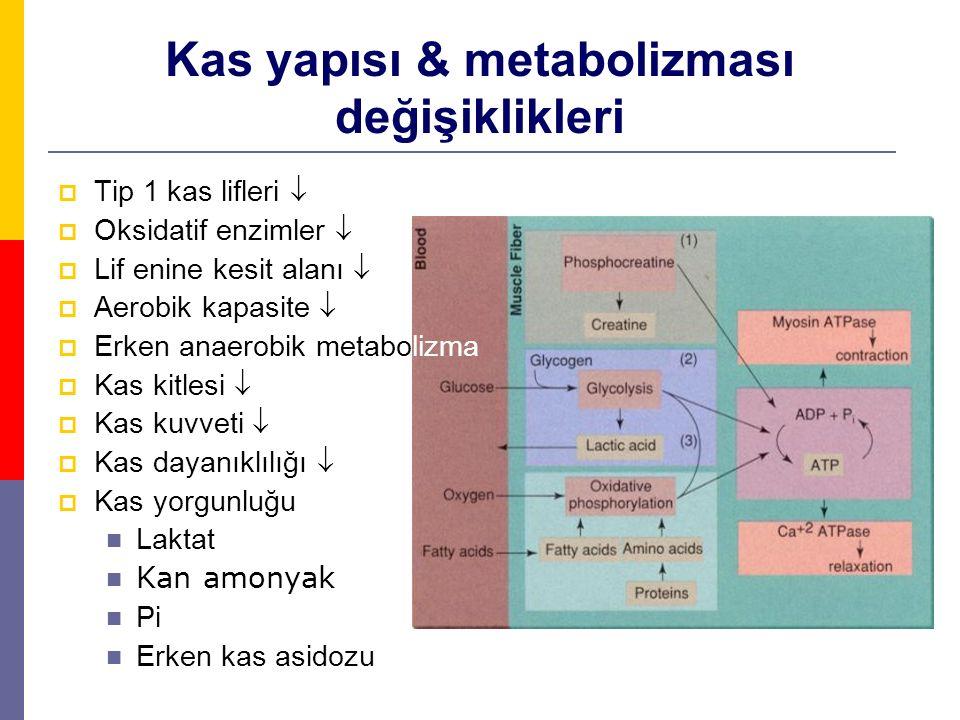 Kas yapısı & metabolizması değişiklikleri  Tip 1 kas lifleri   Oksidatif enzimler   Lif enine kesit alanı   Aerobik kapasite   Erken anaerobi