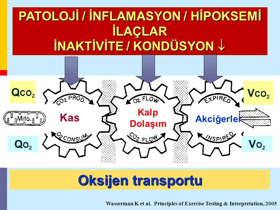 Kas Kalp Dolaşım Akciğerler Q CO 2 Oksijen transportu PATOLOJİ / İNFLAMASYON / HİPOKSEMİ İLAÇLAR İNAKTİVİTE / KONDÜSYON  Wasserman K et al. Principle