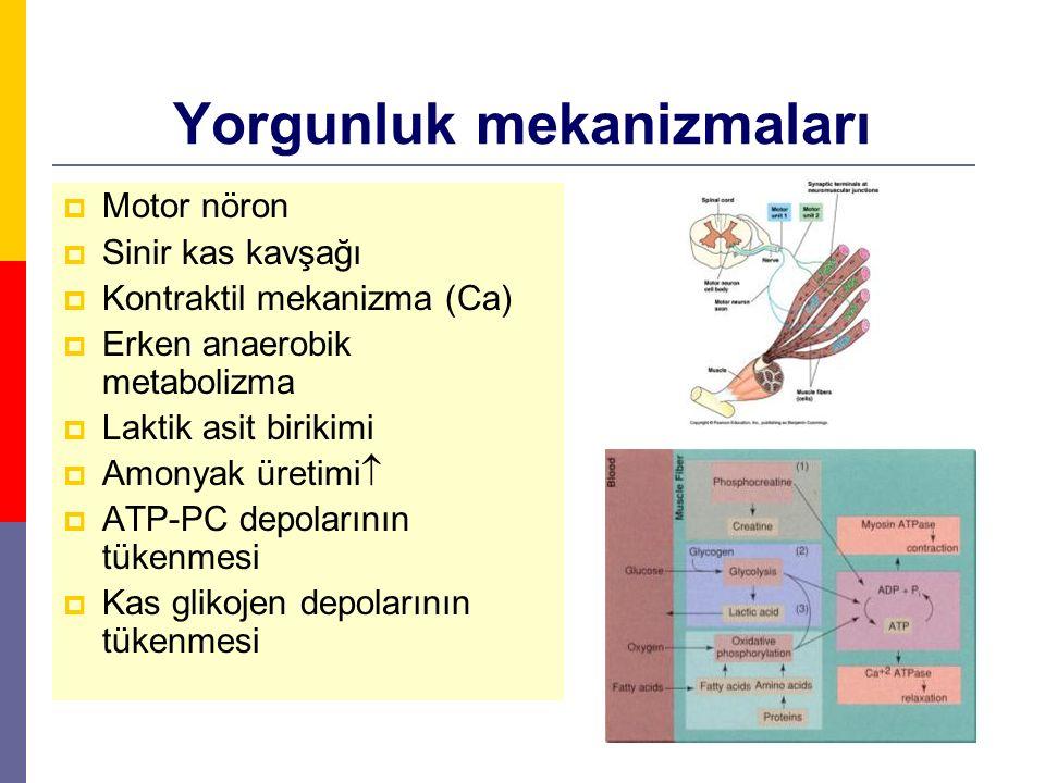 Yorgunluk mekanizmaları  Motor nöron  Sinir kas kavşağı  Kontraktil mekanizma (Ca)  Erken anaerobik metabolizma  Laktik asit birikimi  Amonyak ü