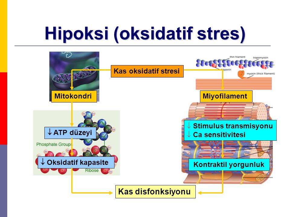 Hipoksi (oksidatif stres) Kas oksidatif stresi MitokondriMiyofilament  ATP düzeyi  Oksidatif kapasite Kas disfonksiyonu  Stimulus transmisyonu  Ca