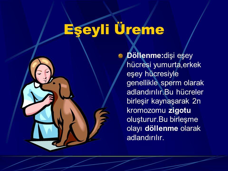 Eşeyli Üreme Döllenme:dişi eşey hücresi yumurta,erkek eşey hücresiyle genellikle sperm olarak adlandırılır.Bu hücreler birleşir kaynaşarak 2n kromozomu zigotu oluşturur.Bu birleşme olayı döllenme olarak adlandırılır.