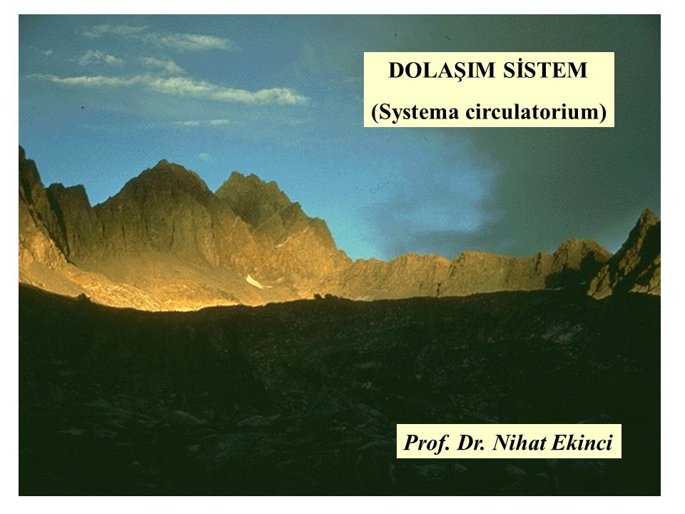DOLAŞIM SİSTEM (Systema circulatorium) Prof. Dr. Nihat Ekinci