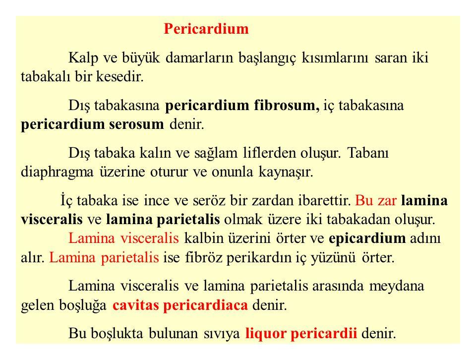 Pericardium Kalp ve büyük damarların başlangıç kısımlarını saran iki tabakalı bir kesedir.