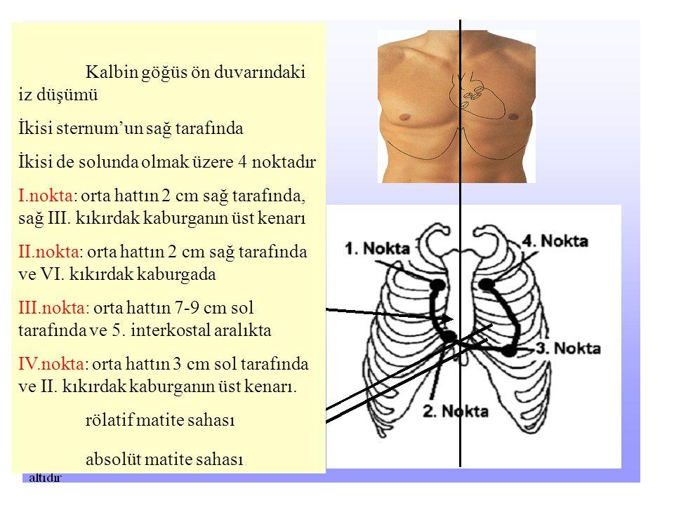 Kalbin göğüs ön duvarındaki iz düşümü İkisi sternum'un sağ tarafında İkisi de solunda olmak üzere 4 noktadır I.nokta: orta hattın 2 cm sağ tarafında, sağ III.