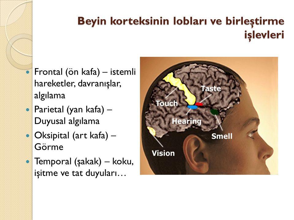 Beyin korteksinin lobları ve birleştirme işlevleri Frontal (ön kafa) – istemli hareketler, davranışlar, algılama Parietal (yan kafa) – Duyusal algılam