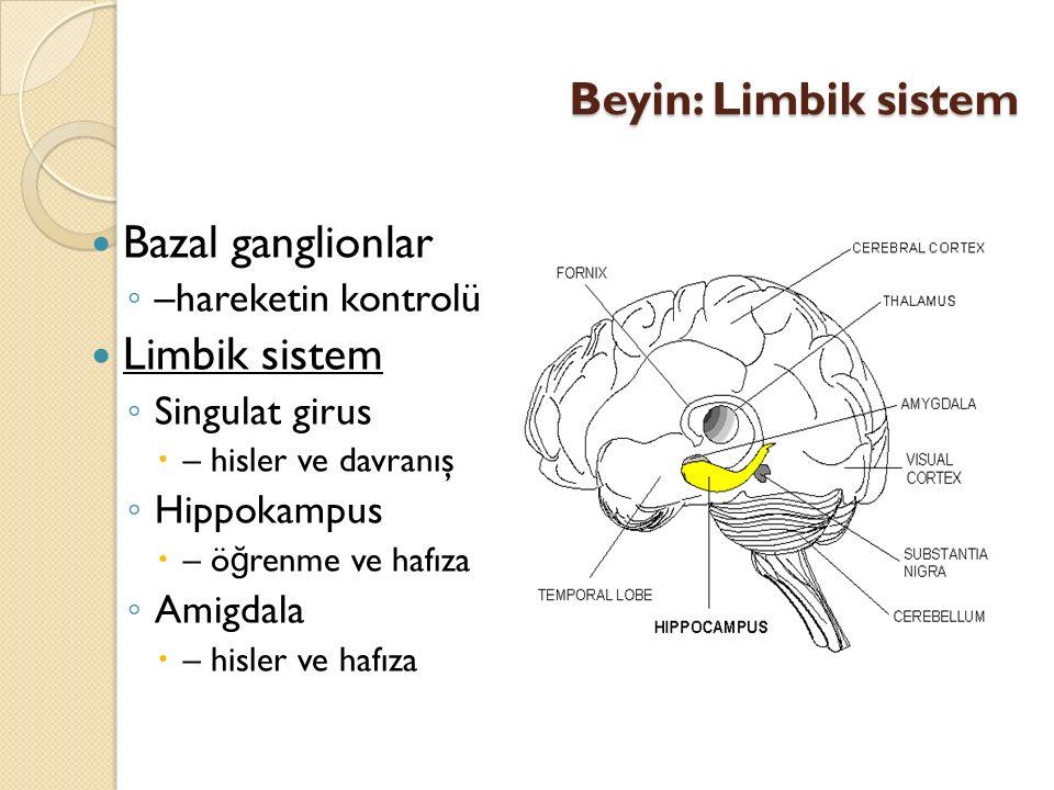 Beyin: Limbik sistem Bazal ganglionlar ◦ –hareketin kontrolü Limbik sistem ◦ Singulat girus  – hisler ve davranış ◦ Hippokampus  – ö ğ renme ve hafı